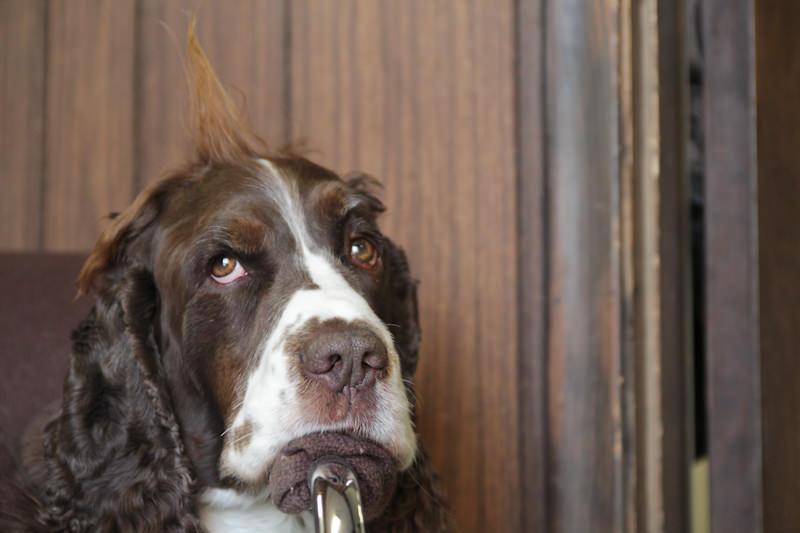 Mack Hair