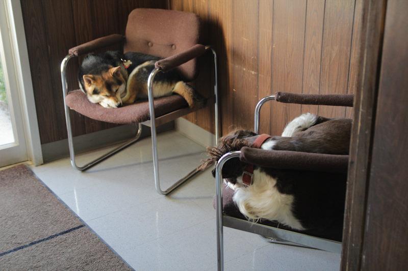 Mack and Maru Foyer Chairs 2